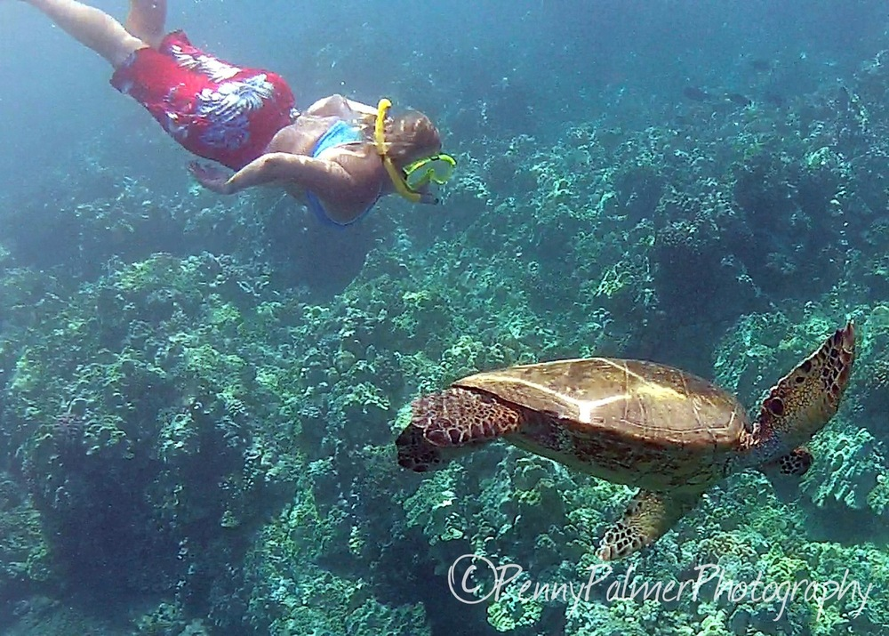 Maui Snorkeling with Turtles